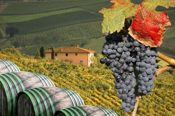 A deluxe wine tour in Tuscany