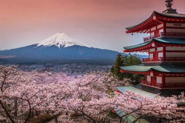 Mt Fuji Cherry Blossom Experience