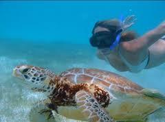 Snorkling with turtles in Playa del Camen