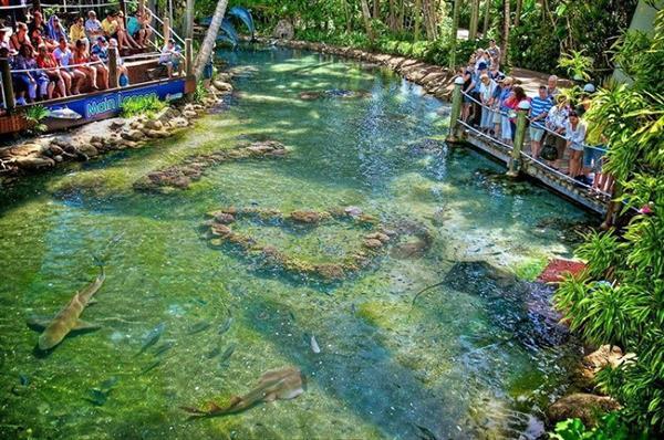 Daydream Island Day Trip For Ash