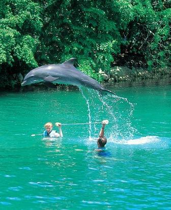 2 adults – Swim with dolphins