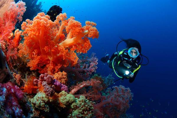 Discover Scuba Dive Course