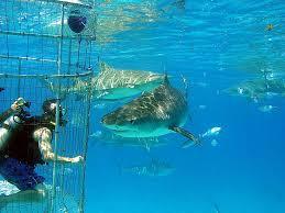 Swim with the sharks adventure