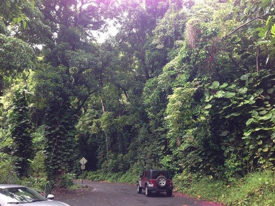 Road to Hana Road Trip