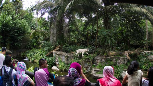 Singapore Zoo - Tickets for 2
