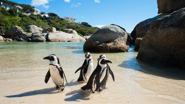 Day Tour Exploring the Cape Peninsula
