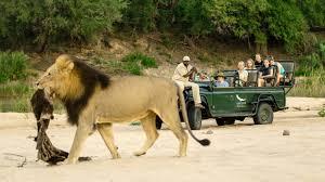 Lodging & Safari Game Drive