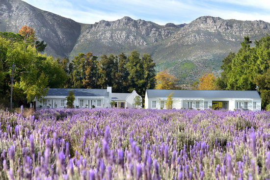 1 Night at the Lavender Farm at Franschhoek