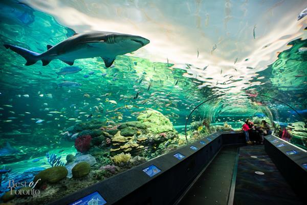 Ripleys Aquarium Canada