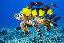 Reef Hopping