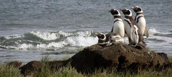 Penguin Spotting