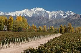 Wine Tasting in Mendoza