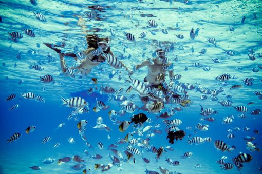 Shark & Stingray Snorkel Safari