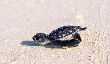 Baby Turtle Tour