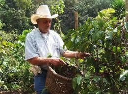 Costa Rican coffee plantation tour
