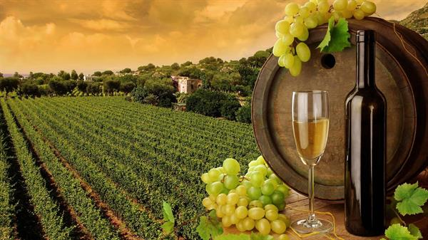 Napa and Sonoma Wine Country Tour ticket
