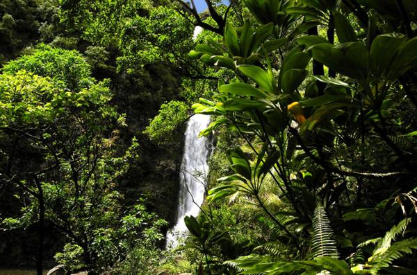 Maui Full Day Tour