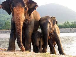 Elephant Orphanage Sanctuary