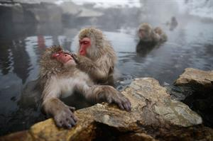 Monkeys in Japan - Honeymoon registry Japan