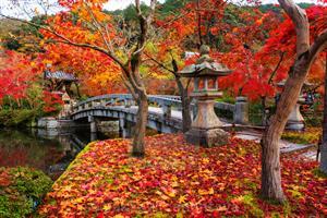 Delbridge, I do! - Gift registry Japan