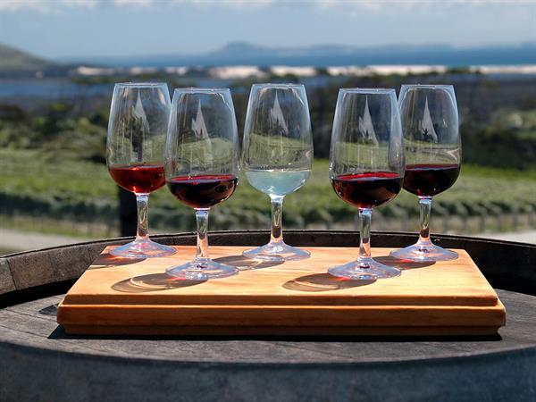 Wine Tasting, Vittoria