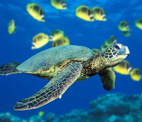 Indonesia - Snorkel Gili Islands