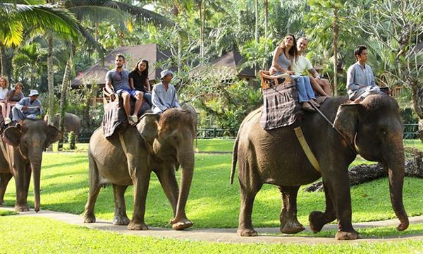Elephant Safri Park