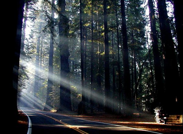 Camping in the Humboldt Redwood State Park (2)