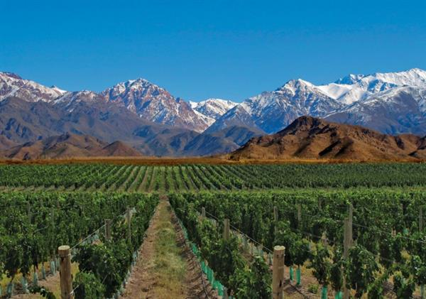 Wine tasting and lunch in Mendoza