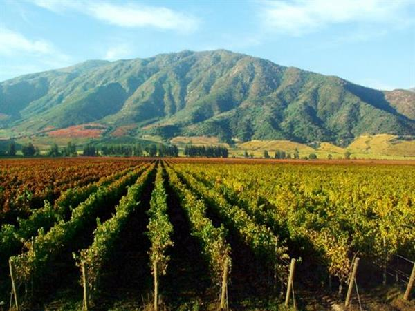 Colchagua Valley winery tour and lunch