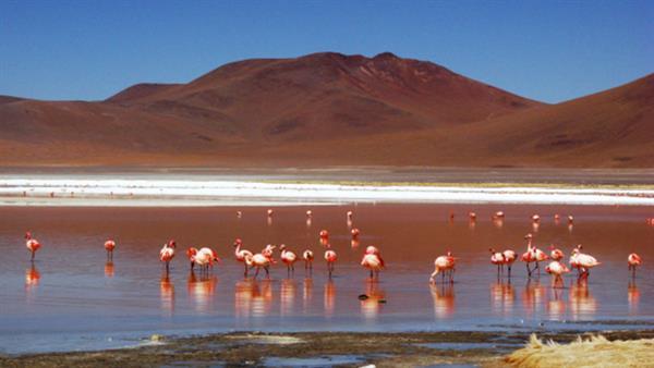 Guided tour through Atacama Desert