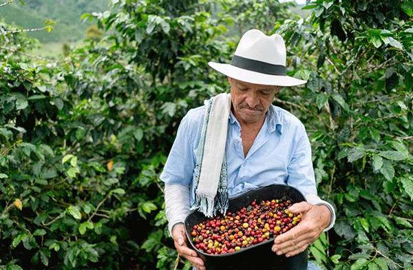 Tour and tasting at a coffee planation in Salento