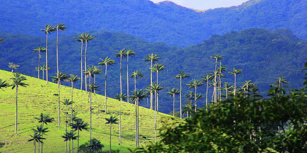 Day trip to Valle de Cocora