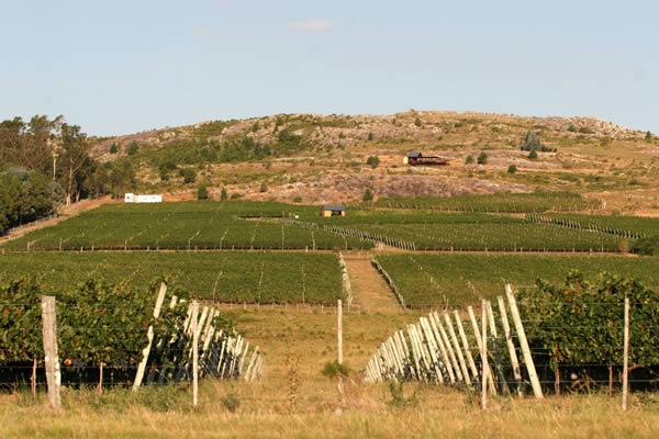 Vineyard Tour at Alto de la Ballena