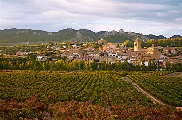 Winery tour in La Rioja
