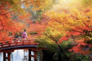 Fi and Ron's Honeymoon Registry - Honeymoon registry Japan