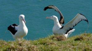 Entry Fee - Royal Albatross Centre