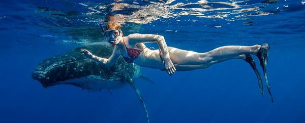 Swim with the whales  Sunshine Coast