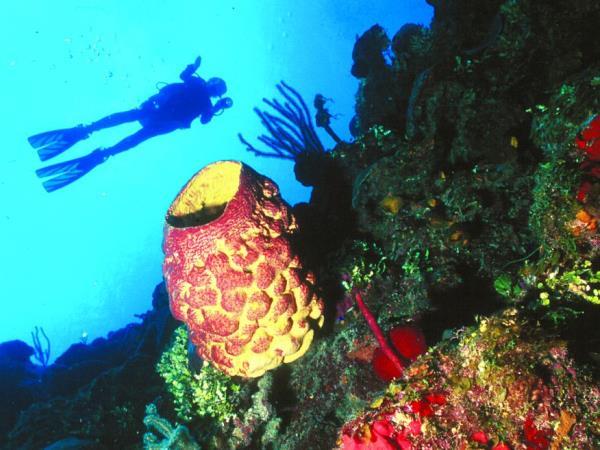 Scuba diving, Cuba