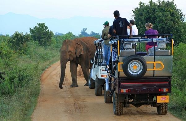Tickets to Safari Tours in Sri Lanka