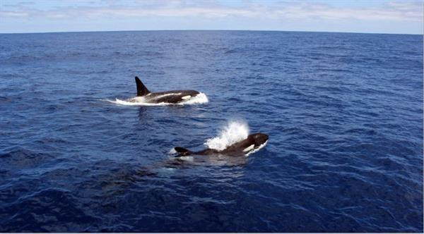 Orca Tour Bremer Bay