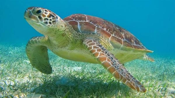 Snorkel with Turtles and Explore Cenotes