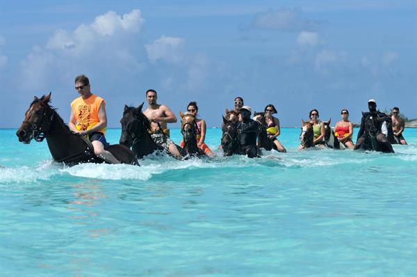 Horseback Riding by Land & Sea Experience