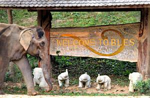 Hilary's Elephant Rescue Trip to Thailand - Gift registry Boon Lott Elephant Sanctuary (BLES) in Thailand