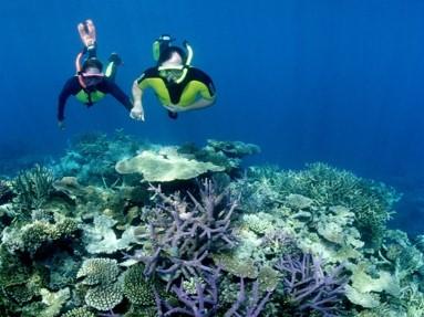 Snorkel equipment hire