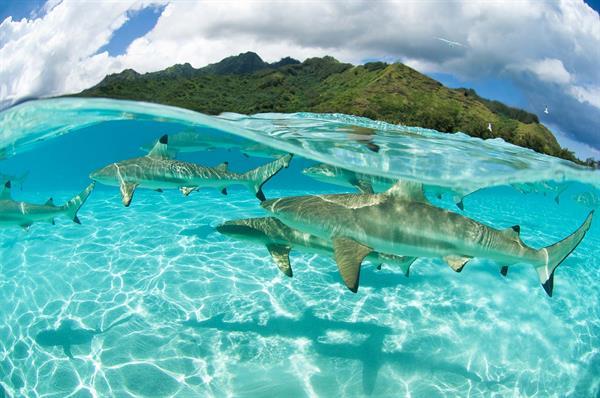 Shark & ray dive on Moorea Island