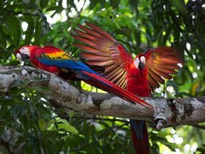 Simon & Lauren's Honeymoon - Honeymoon registry Costa Rica