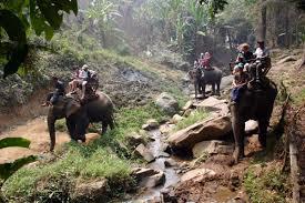 Chiang Mai Jungle Trek