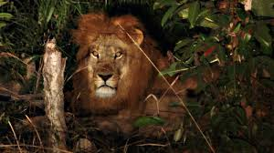 Night Safari Tour... RAARRR!!!!
