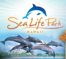 Sea Life Park Oahu - Hannah